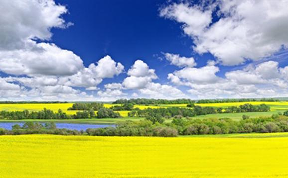 Vue sur la Saskatchewan, province de l'Ouest du Canada